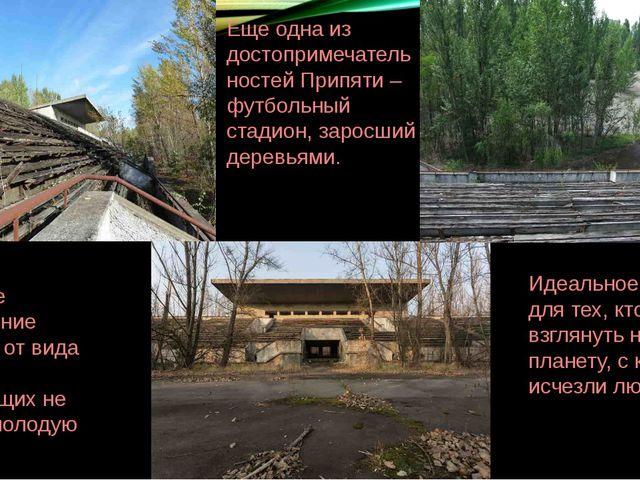 Еще одна из достопримечательностей Припяти – футбольный стадион, заросший дер...