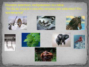Назовите животных, изображенных на слайде. Что бы вы сказали о способах пита