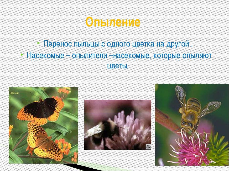 Перенос пыльцы с одного цветка на другой . Насекомые – опылители –насекомые,...
