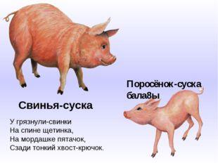 Свинья-суска У грязнули-свинки На спине щетинка, На мордашке пятачок, Сзади т
