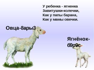 Овца-8ары3 Ягнёнок-б9р9с У ребенка - ягненка Завитушки-колечки, Как у папы ба