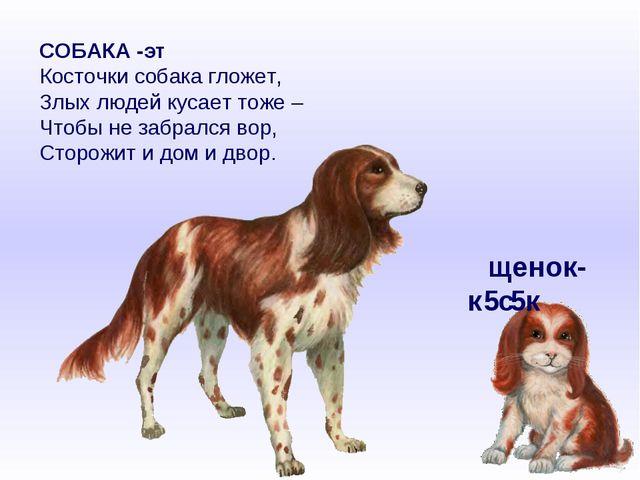 СОБАКА -эт Косточки собака гложет, Злых людей кусает тоже – Чтобы не забрался...