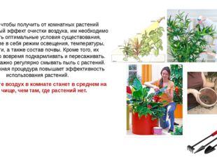 Для того чтобы получить от комнатных растений максимальный эффект очистки воз