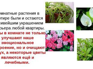 Комнатные растения в квартире были и остаются красивейшим украшением интерьер