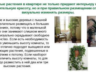 Комнатные растения в квартире не только придают интерьеру комнаты дополнитель