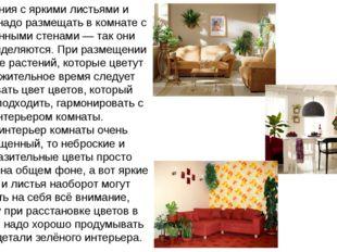 Растения с яркими листьями и цветами надо размещать в комнате с однотонными с