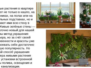Комнатные растения в квартире размещают не только в кашпо, на подоконниках, н