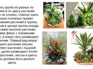 Создать группу из разных по величине и по цвету растения довольно не сложно,
