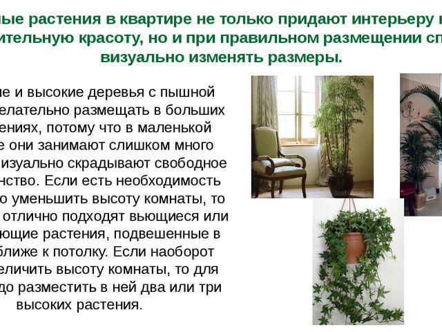 Комнатные растения в квартире не только придают интерьеру комнаты дополнитель...