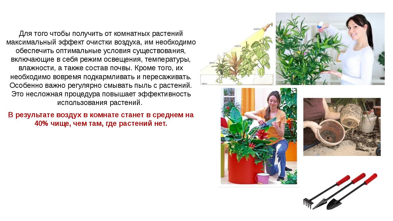 Для того чтобы получить от комнатных растений максимальный эффект очистки воз...