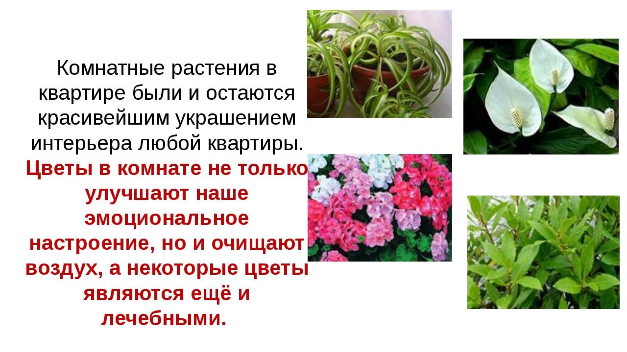 Комнатные растения в квартире были и остаются красивейшим украшением интерьер...