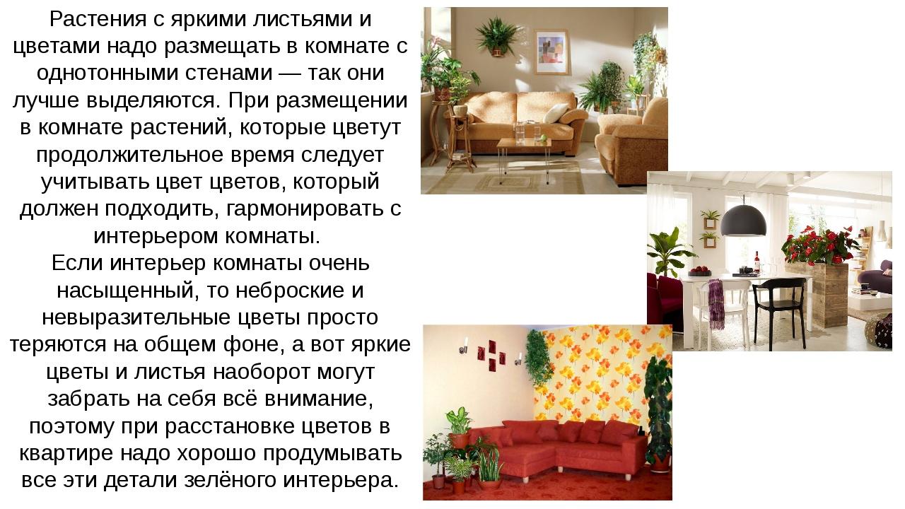 Растения с яркими листьями и цветами надо размещать в комнате с однотонными с...
