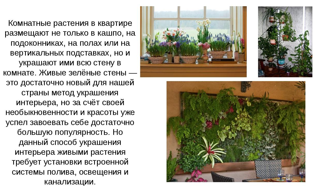 Комнатные растения в квартире размещают не только в кашпо, на подоконниках, н...