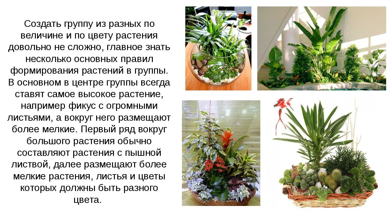 Создать группу из разных по величине и по цвету растения довольно не сложно,...