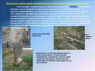 Изучение организмов-индикаторов состояния окружающей среды. В качестве «индик