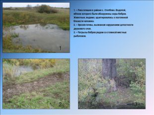 1 2 3 1. – Река Алешня в районе с. Столбово. Водопой, вблизи которого были об