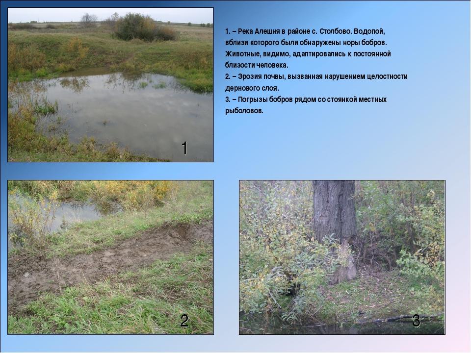 1 2 3 1. – Река Алешня в районе с. Столбово. Водопой, вблизи которого были об...