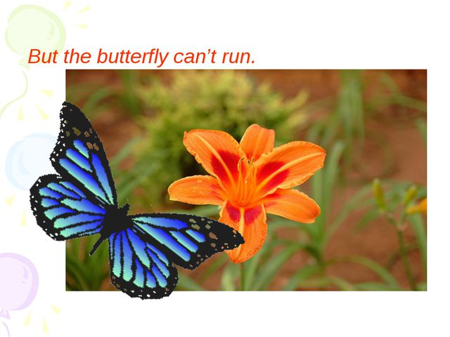 But the butterfly can't run.