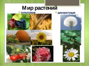 Мир растений культурные дикорастущие