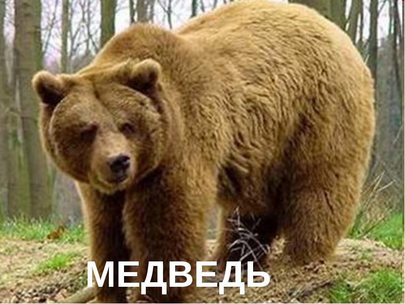 http://fs.nashaucheba.ru/tw_files2/urls_3/1174/d-1173037/img3.jpg