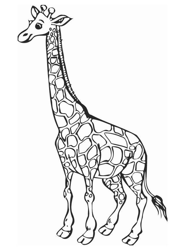 C:\Users\Я\Desktop\giraffe-12758.jpg