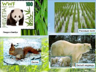 Панда и бамбук Рисовые поля Белка Белый медведь