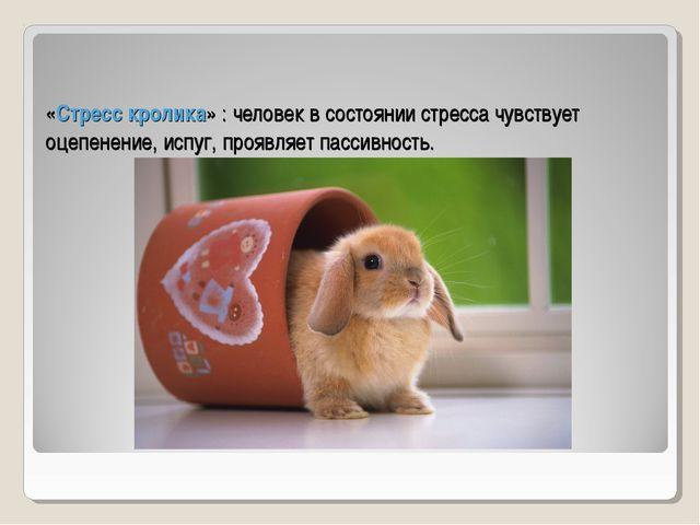 «Стресс кролика» : человек в состоянии стресса чувствует оцепенение, испуг, п...