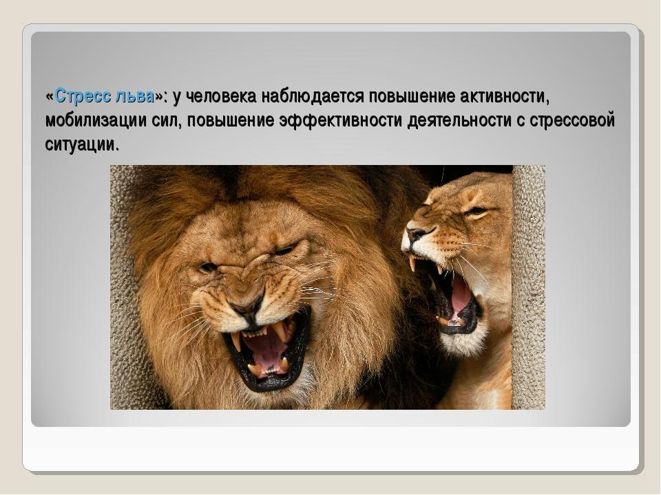 «Стресс льва»: у человека наблюдается повышение активности, мобилизации сил,...