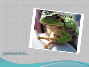 Дорогов использовал в качестве сырья лягушек, а в качестве способа переработ