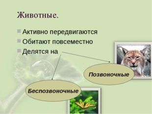 Животные. Активно передвигаются Обитают повсеместно Делятся на Позвоночные Бе