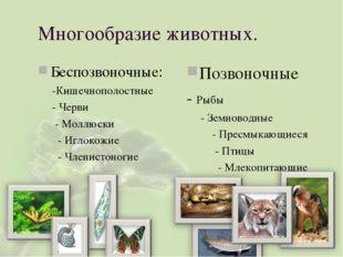 Многообразие животных. Беспозвоночные: -Кишечнополостные - Черви - Моллюски -