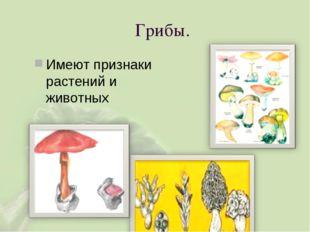 Грибы. Имеют признаки растений и животных