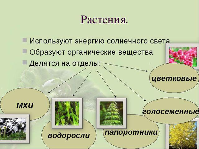 Растения. Используют энергию солнечного света Образуют органические вещества...
