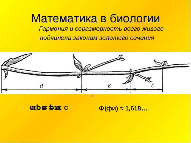 Математика в биологии Гармония и соразмерность всего живого подчинена законам...