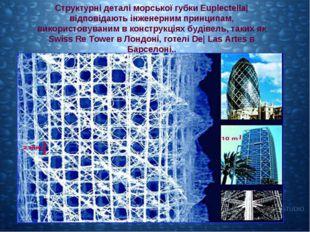 Структурні деталі морської губки Euplectella| відповідають інженерним принцип