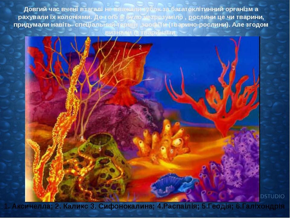 Довгий час вчені взагалі не вважали губок за багатоклітинний організм а рахув...