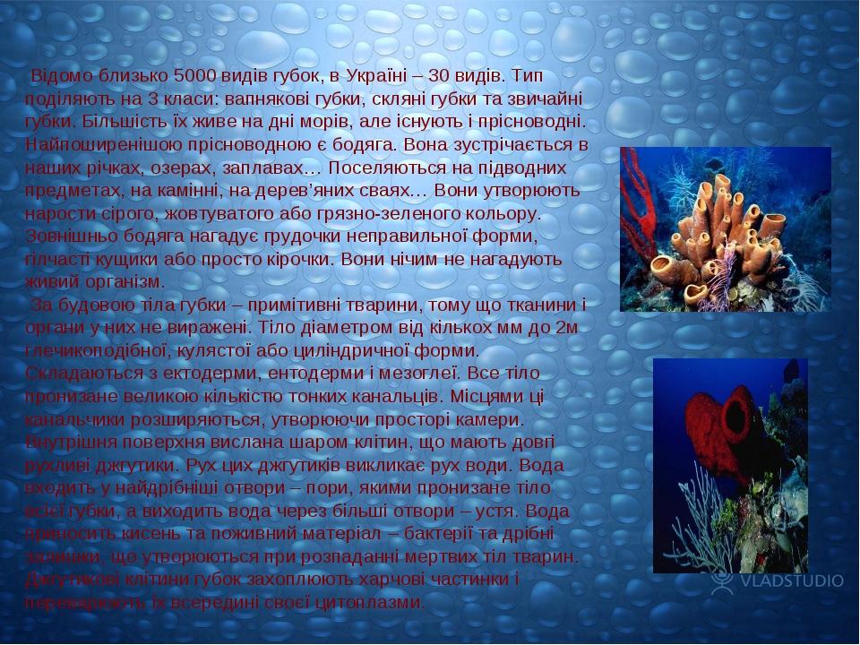 Відомо близько 5000 видів губок, в Україні – 30 видів. Тип поділяють на 3 кл...
