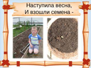 Наступила весна, И взошли семена -