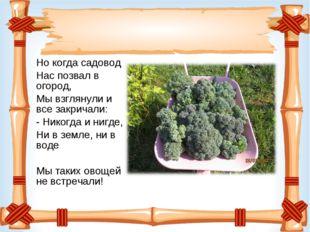 Но когда садовод Нас позвал в огород, Мы взглянули и все закричали: - Никогда