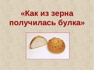 «Как из зерна получилась булка»