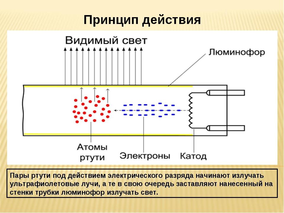 Принцип действия Пары ртути под действием электрического разряда начинают изл...