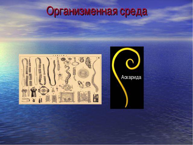 Организменная среда Аскарида