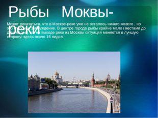 Рыбы Моквы-реки Может показаться, что в Москве-реке уже не осталось ничего жи