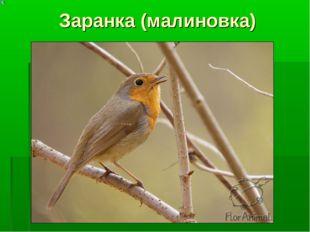 Заранка (малиновка)