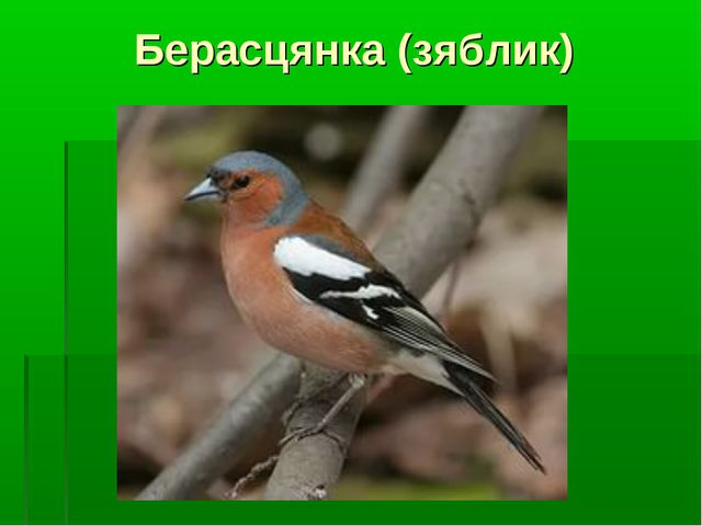 Берасцянка (зяблик)