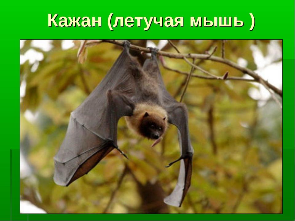 Кажан (летучая мышь )