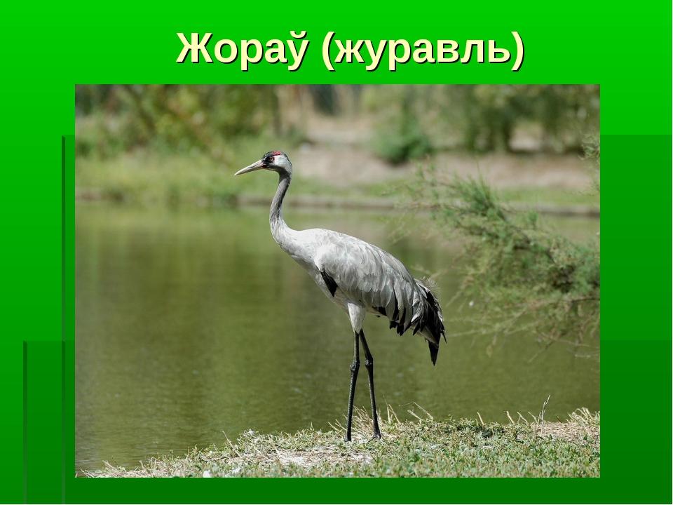 Жораў (журавль)