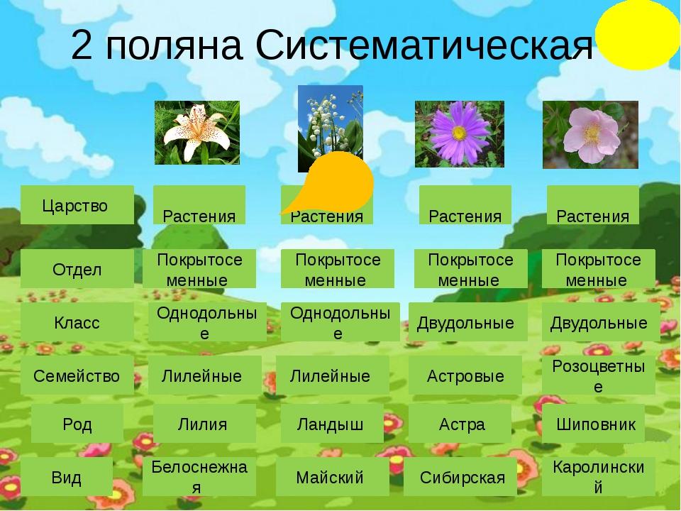 5 поляна Лекарственные растения Ландыш майский Одуванчик Клевер красный Карт...