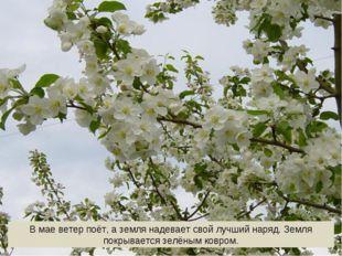 В мае ветер поёт, а земля надевает свой лучший наряд. Земля покрывается зелён