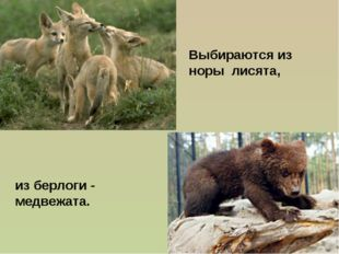 из берлоги - медвежата. Выбираются из норы лисята,